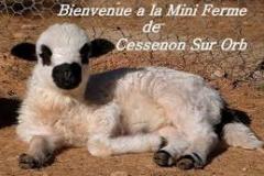 MINI FERME DE CESSENON